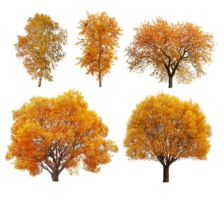 Grote collectie van de herfst bomen op een witte achtergrond