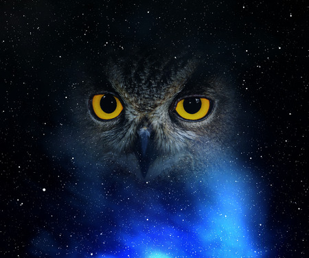 Eyes eagle owl in the night sky Banque d'images