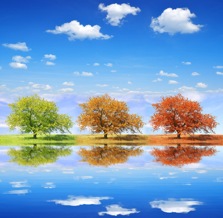 Seasonal trees with blue sky