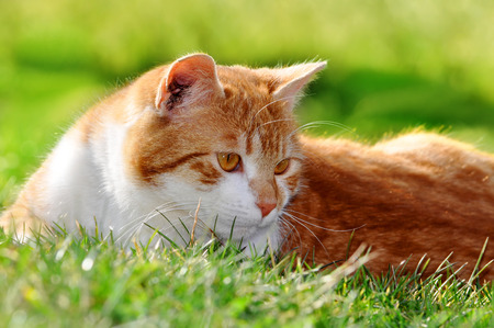 frisky: portrait of a cat in the grass Stock Photo