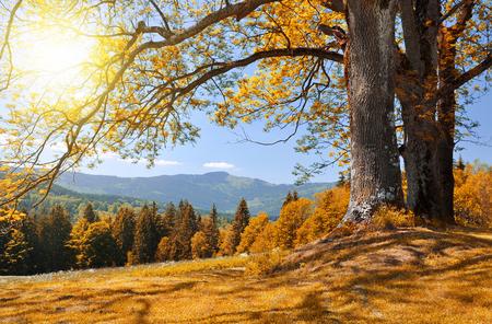 czech republic: Autumn landscape in the national park Sumava - Czech Republic Stock Photo
