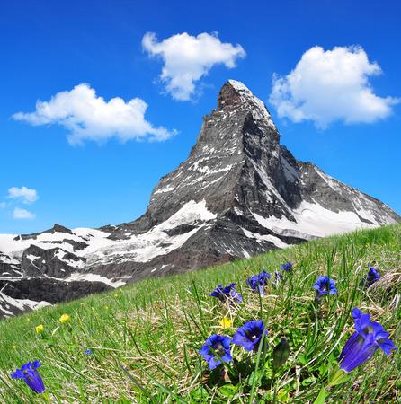 verano: Hermosa monta�a Matterhorn en el primer plano de genciana floraci�n, Alpes Peninos, Suiza Foto de archivo