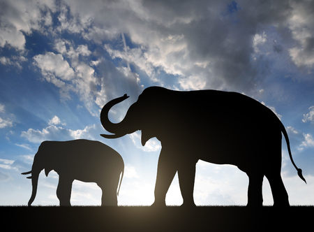 herbivore natural: Silhouette elephants in the sunset Stock Photo