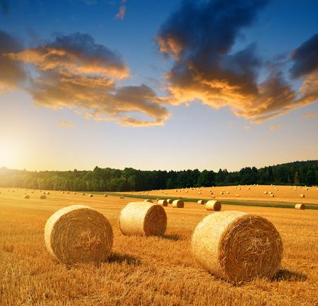 champ de mais: Balles de paille sur les terres agricoles au coucher du soleil Banque d'images