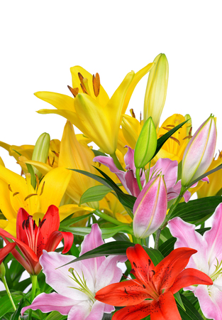 lirio blanco: Colorful lily flowers on white background