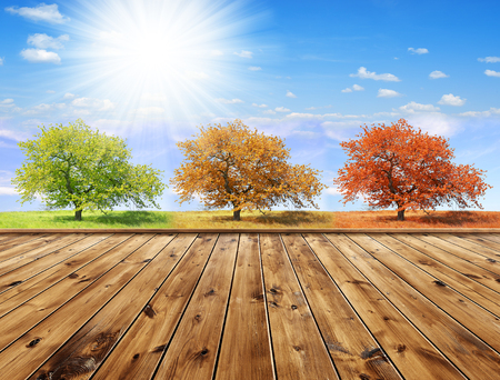 trees seasonal: Seasonal trees with sunny sky and wooden planks