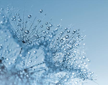 Dewy dandelion flower close up 스톡 콘텐츠