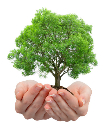 growing tree: Growing tree in hands isolated on white Stock Photo