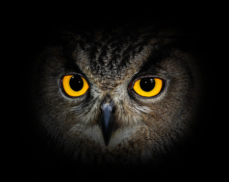 face close up: Eagle Owl, Bubo bubo