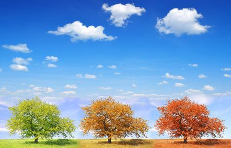 seasonal: Seasonal trees with blue sky
