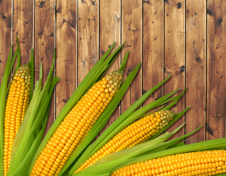 maize cultivation: Ripe corn with green leaves on the wooden brown table Stock Photo