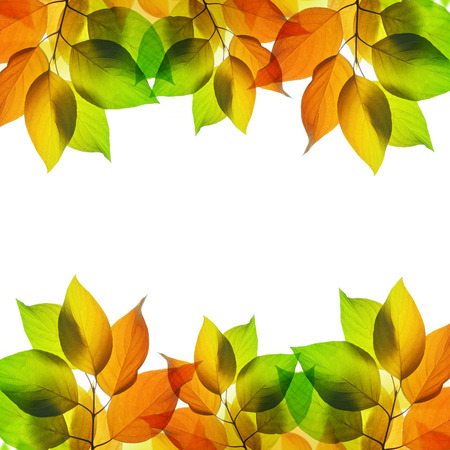 Frame from autumn leaves on white background
