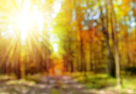 dia soleado: Bokeh en el bosque de otoño. Otoñal fondo natural del desenfoque con los rayos del sol. Foto de archivo