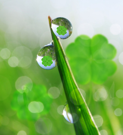 quarterfoil: Fresh dewy green grass with clover leaf. Nature background.