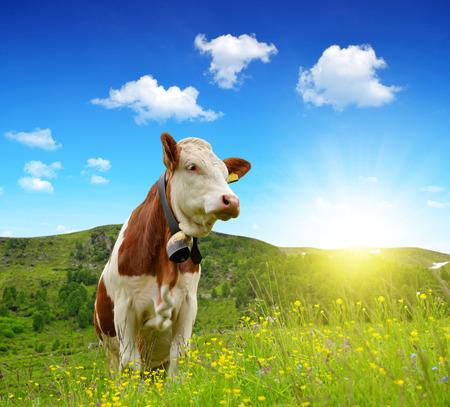 vaca: Las vacas en el Prado