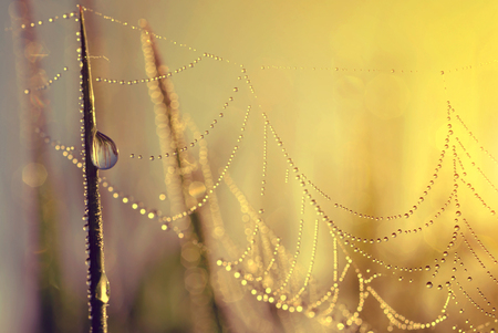 leaf water: Fresh grass with dew drops and spider web at sunrise. Nature Background