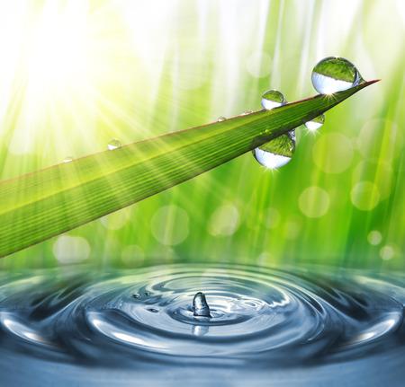 agua splash: Hierba verde fresca con gotas de roc�o de cerca. Fondo de la naturaleza Foto de archivo