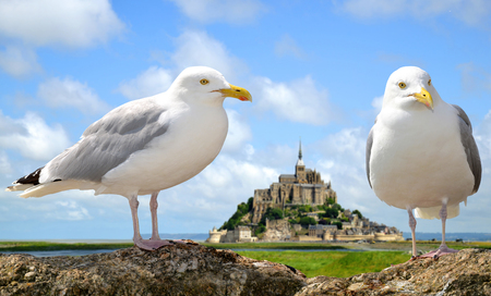 saint: Seagulls in the background Mont Saint Michele, France