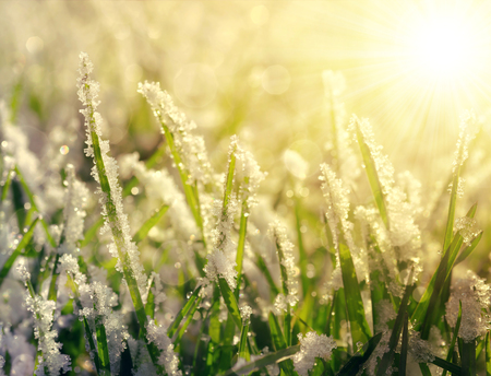 march: Frozen grass at sunrise close up. Nature background.