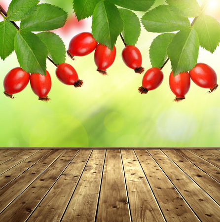 rosa: Rose hips Rosa canina with wooden board Stock Photo
