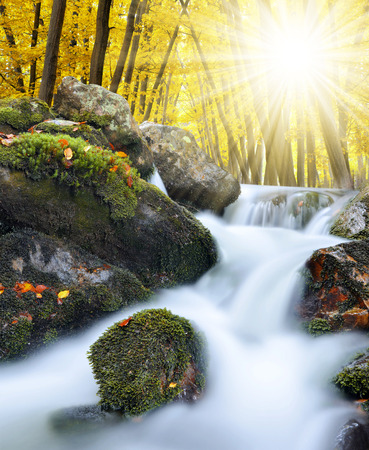 nant: Autumnal forest with mountain creek in National park Sumava - Czech Republic Stock Photo