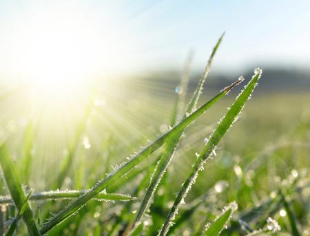 Frozen grass close up. Nature background.