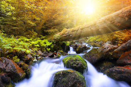 creek: Autumnal forest with mountain creek in National park Sumava - Czech Republic Stock Photo