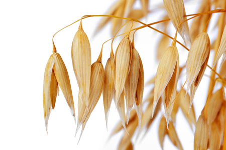corn stalk: oats isolated on white