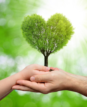 hands holding heart: Child and male hands holding a tree in the shape of heart Stock Photo