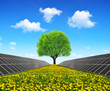 Solar energy panels and tree on dandelion field. Clean energy.