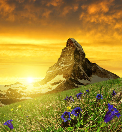 Beautiful mountain Matterhorn in the foreground blooming gentian at sunset, Pennine Alps, Switzerland