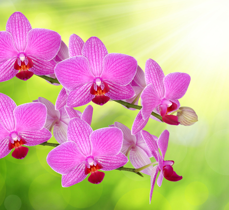 green and purple: purple orchid on green natural background
