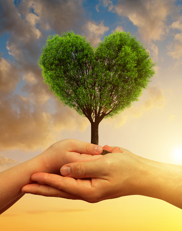Child and male hands holding a tree in the shape of heart at sunset