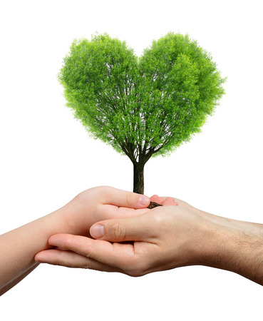 heart hands: Child and male hands holding a tree in the shape of heart Stock Photo