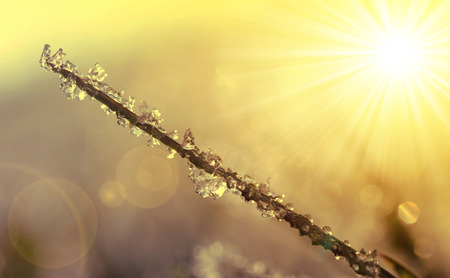 winter thaw: Frozen grass at sunrise close up. Nature background.