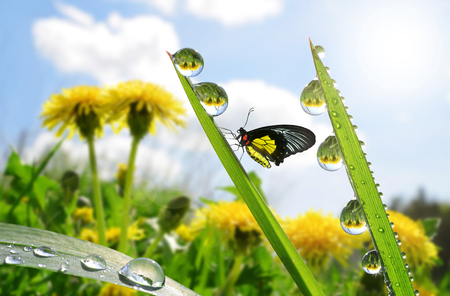 water plants: Fresh green grass with dew drops and butterfly closeup. Nature Background Stock Photo