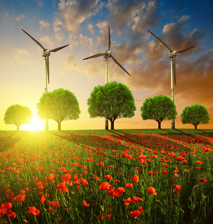 renewable energy: Red poppy field with trees and wind turbines in the sunset. Spring landscape. Stock Photo