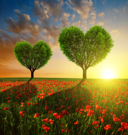 Poppy field with trees in the shape of heart at sunset. Valentines day.