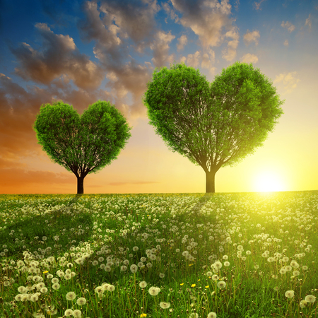 Dandelion fields with trees in the shape of heart at sunset. Valentines day.