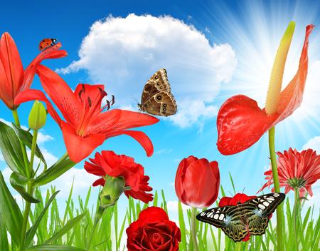 Flores rojas con las mariposas en el fondo del cielo soleado. Foto de archivo