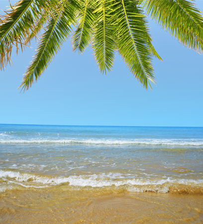 clear sky: Blue sea with palm tree in sunny day.