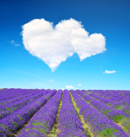 Lavender flower blooming scented fields and blue sky with a white clouds in the form of heart. Valentines day.