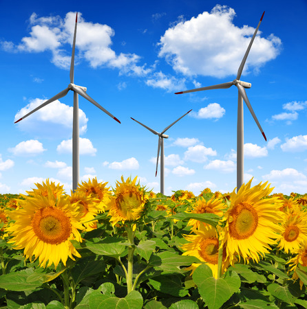 wind power plant: Sunflower field with wind turbines. Spring landscape. Stock Photo
