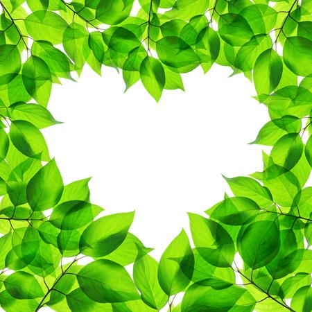 Spring green leaves in heart shape on white background