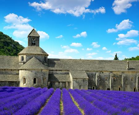 senanque: Abbaye de Senanque with lavender field - Provence, France