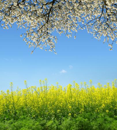 Wiosna krajobraz z pola rzepaku i drzewa kwitnienia.