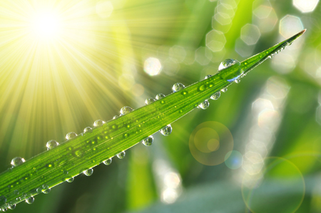 beauty in nature: Fresh green grass with water drops closeup. Nature Background