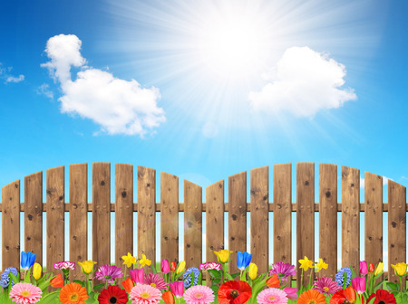 slats: Blooming colorful flowers in the background wooden fence.
