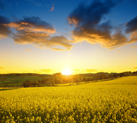 spring landscape: Sunset over spring landscape with rapeseed field Stock Photo