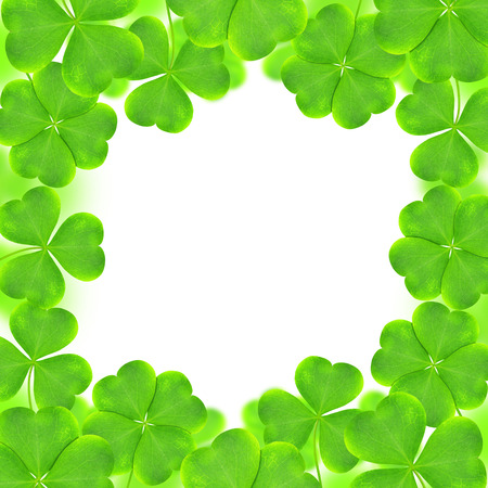 clovers: Frame from green clovers. St. Patricks day background.